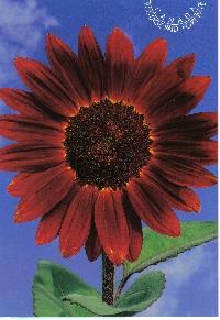 Vertical Post card Swap - October 2011