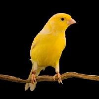 ATC Addicts - BIRD ATC - QTA