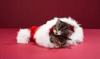 ★Make a Wish★ Christmas Card