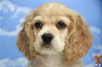Dog Breeds A-Z: #3 C