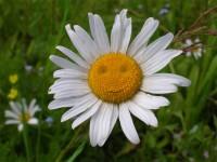 Make me smile pc swap #3