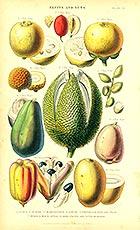 Botanical Art ATC #1