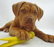 Dog Breeds A-Z: #4 D