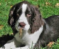 Dog Breeds A-Z: #5 E