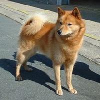Dog Breeds A-Z: #6 F