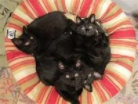 Meow, We Love Black Cats Postcard Swap.