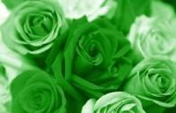 ATC color series - green!