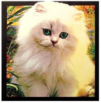 Cute Cat Postcards in an Envelope