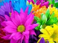 Pretty Flowers ATC
