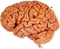 Science Nerds ATC #3: Brains!