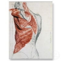 Anatomy Postcard PC QUICK Swap