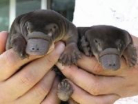 Australian Animals Postcard Swap