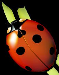 Ladybug ATC