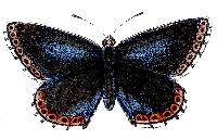 Mixed Media ATC w/ a Butterfly