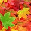 Fall Photo - tree, leaf, whatever means Fall to yo