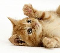 Cat Postcard #7