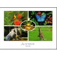 WPS - Animal Postcard #2