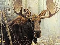 Native State Animal PC