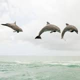 Decorate My Profile with D ~Dolphins