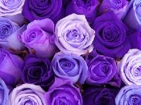 Beginners ATC Swap #1---Purple Passion