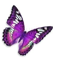 Purple Butterfly ATC Swap - USA