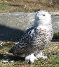 ~♥Pinterest: Owls♥~