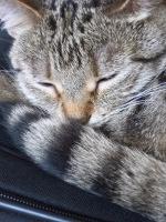 Catlover Postcard
