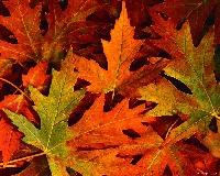 Fall in a baggie - international