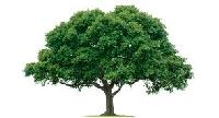 Tree ATC