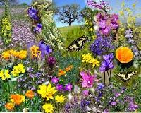 Celebrate springtime surprise package