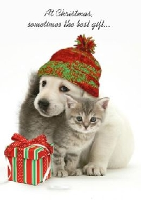 Christmas card scavenger hunt - Cats or dogs