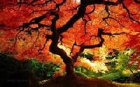 S: My Fabulous Fall