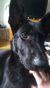 Dog lover's pen pal postcard-swap