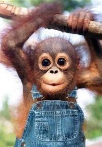 I spy a monkey