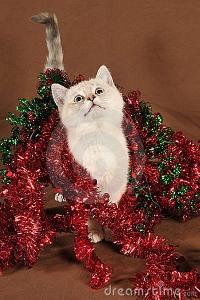Trinket's Christmas Cat ATC swap