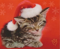 Quick Animal Christmas Card