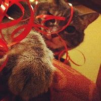 Trinket's Cats and Festive Scraps ATC Swap