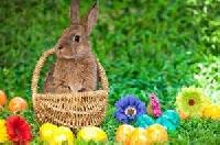 Easter/Spring Pick 3 Swap