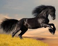 A Week Postcard Swap # 14 - A horse/Horses