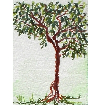 Tree Lovers ATC