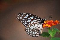 June Butterflies