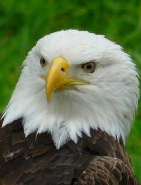 Do You Have an EAGLE Eye? Animal PC Swap Series #8