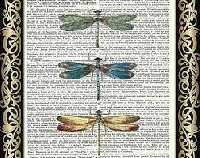 Book Page/ Dragonfly