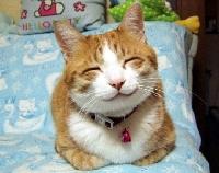 Cat ATC