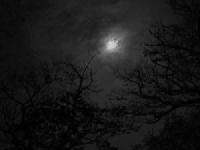 PINTEREST - Moonlust