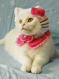 Happy kitty swap.