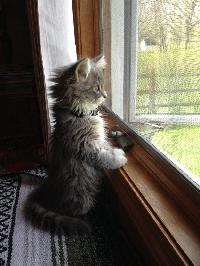 Pinterest - Cutie/Quirky Kitties & Cats