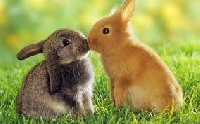 Some 'bunny' loves you!