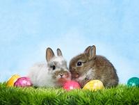 UK Easter Card Swap