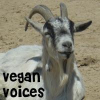 VV Forum Intro #1